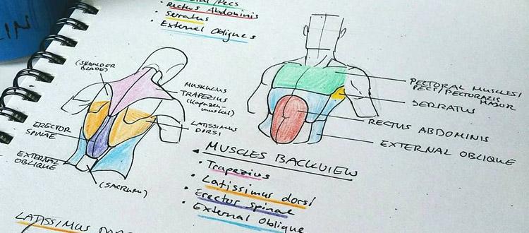 курсы английского для врачей москва
